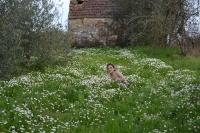 A Primavera