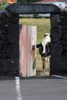 GeoFoto Tema Portas / Janelas_2