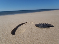GeoFoto Setembro 2014: Praia_3